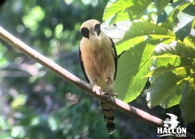 bird in manuel antonio