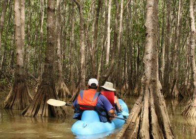 kayak in mangrove tour